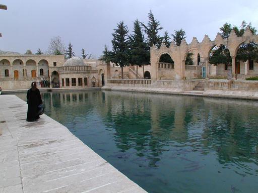 Abraham carp pool